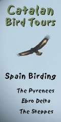 Catalan Bird tours